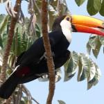 Im Reich des Jaguars – Brasilien, Pantanal